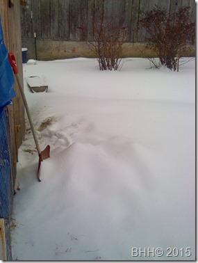 Snowy backyard