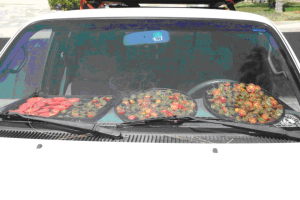 Tomatoes on dashboard of truck